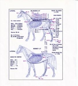 Evropa chce léčit koně homeopatiky