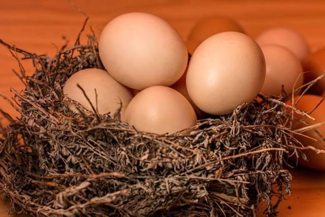 Co s tolika vejci? Vaječné menu na celý den