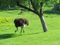 Z Pardubic na Kunětickou horu