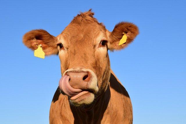 Potraviny bez éček? Certifikát dostalo 70 výrobků