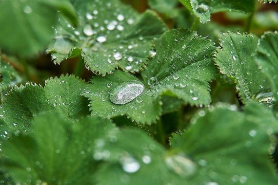 Myomy můžeme léčit bylinkami, obklady, výživou arelaxací