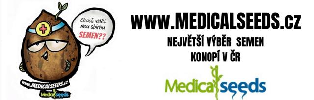 Kde se dá v Česku sehnat léčivé konopí?