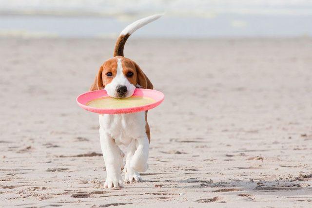 Kam se psem, když jedete na dovolenou?