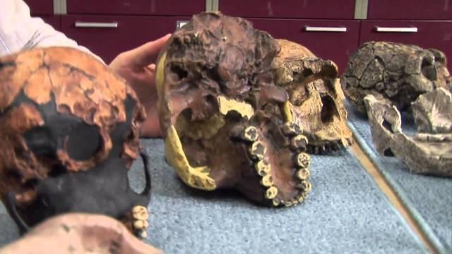 Vědci vypěstovali první umělé maso