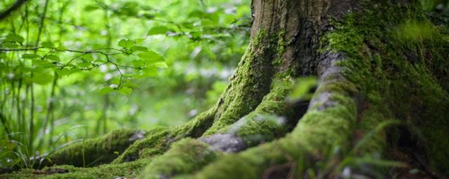 Léčivá síla stromů a lesů – stromy a zdraví – na co který strom pomůže?