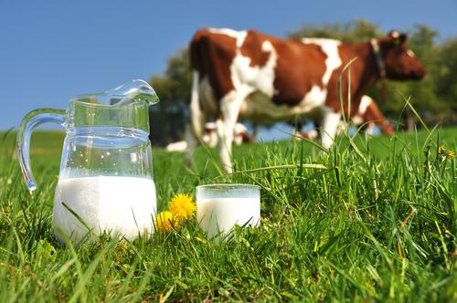 Pít mléko – nepít mléko? Je mléko vůbec zdravé?