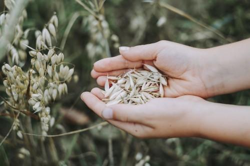 Ovesné otruby a zdraví – skvěle detoxikují a čistí trávící soustavu