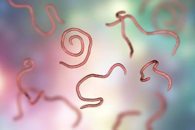Detoxikace proti parazitům – jak na ni?