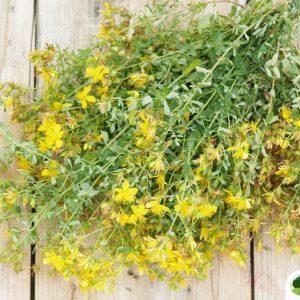 Třezalka tečkovaná a zdraví – zdravá bylinka