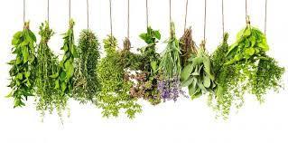 Trápí vás rýma, bolesti nebo zažívací potíže? Vsaďte na přírodní účinky bylinek!