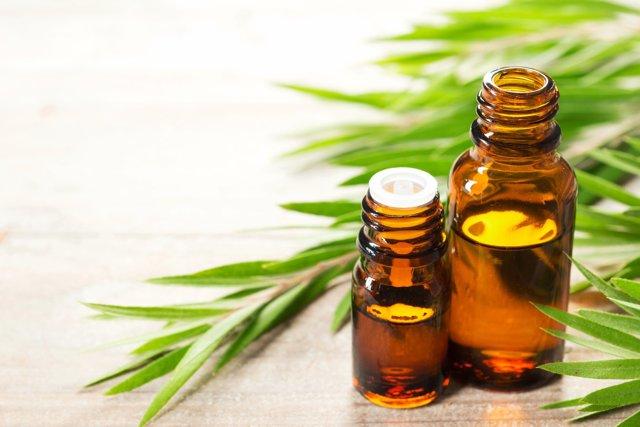 Borovicový olej a zdraví – jaké má účinky?