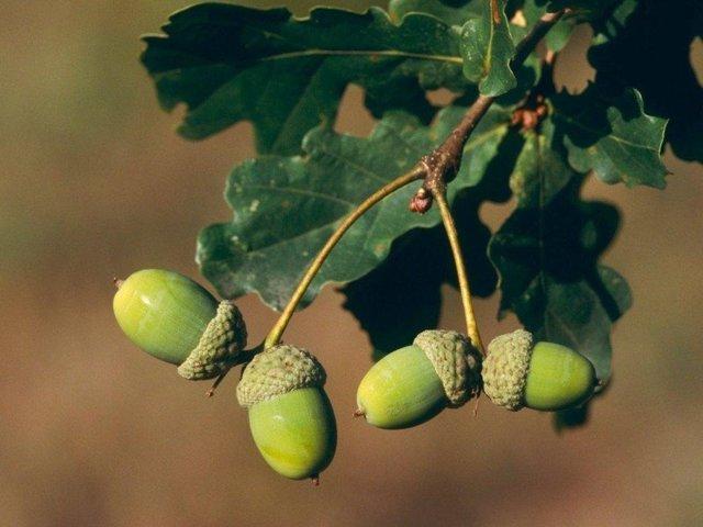 Lignany – jejich zdroje a účinky – na co jsou dobré?