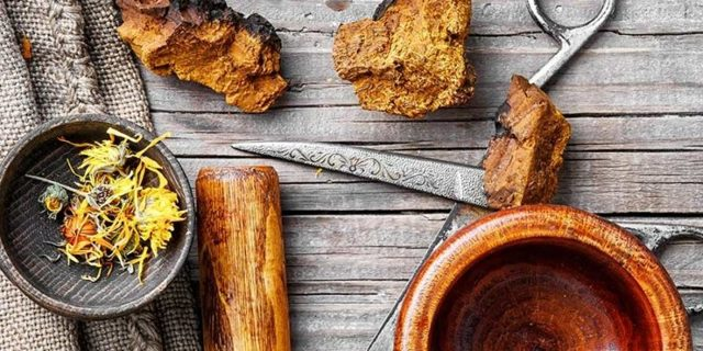Léčivá houba Čaga sibiřská (Chaga) – houba nesmrtelnosti