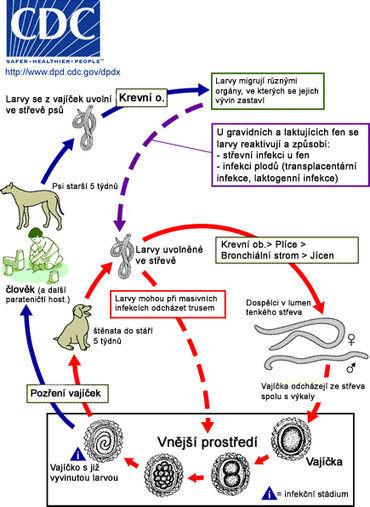 Choroby přenosné ze zvířat na člověka – zoonózy