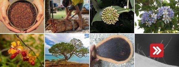 Kůra ze stromů a její léčivé účinky