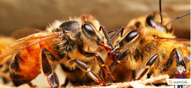Jak poznat kvalitní med?
