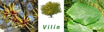 Vilín – keř s protizánětlivým účinkem