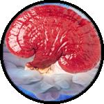Spirulina na hubnutí i snížení krevního tlaku – královna superpotravin