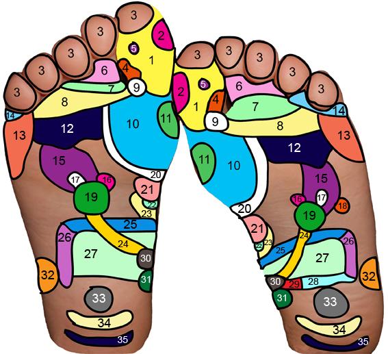Reflexologie chodidel neboli reflexní masáž chodidel