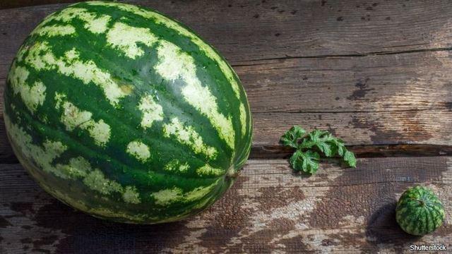 Žlutý (medový) meloun a zdraví – na co je dobrý?