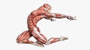 Osteopatie – terapie rukama – když v lidském těle souvisí vše se vším
