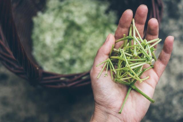 Bezové květy a zdraví + několik zdravých receptů