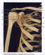 Bolest v rameni