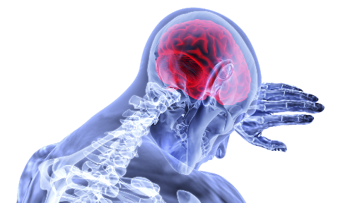 100 úžasných zajímavostí o mozku