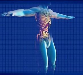 Lidská játra – jejich funkce a detoxikace