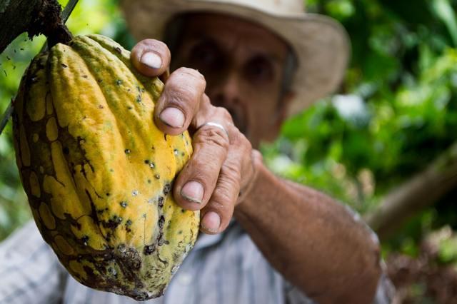 Konzumace bylinek a zdraví – jaké má jejich konzumace benefity?