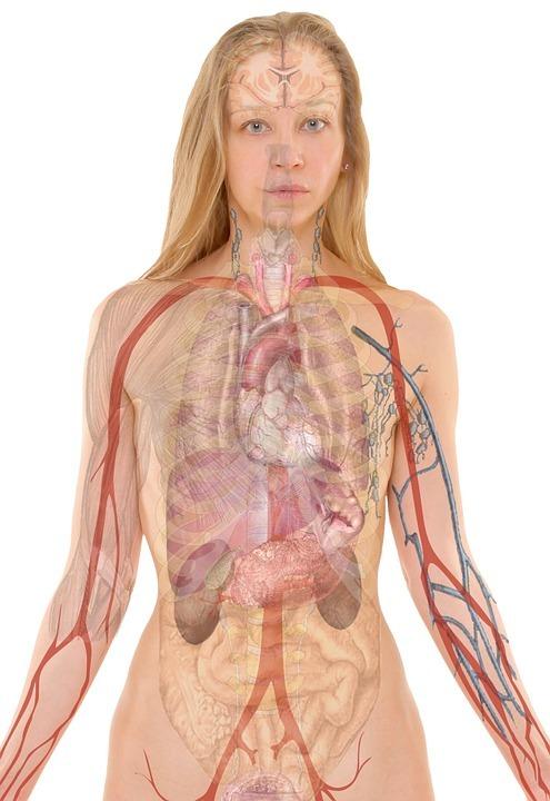 Jak na zdravá játra? Jak je regenerovat? Zkuste naše tipy!
