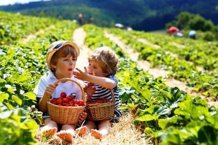 Lesní jahody jsou zdravé i pro krásu – jak si je připravit a proč jsou zdravé?
