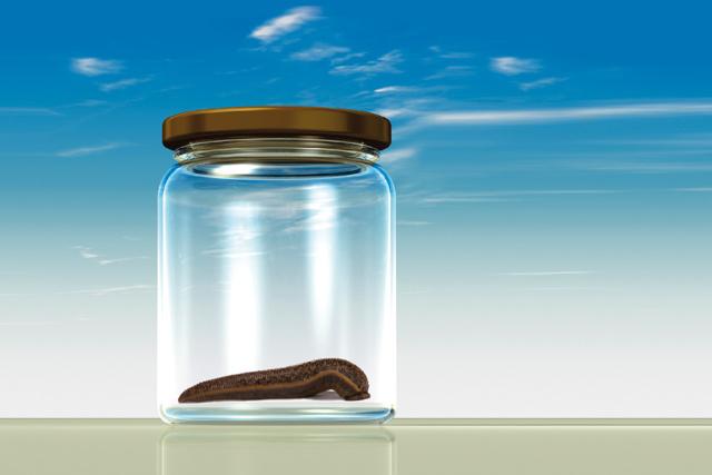 Hirudoterapie – pijavice v lékařství – jak léčba pijavicemi funguje?