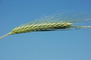 Detoxikace zelenými potravinami – jak na ni?