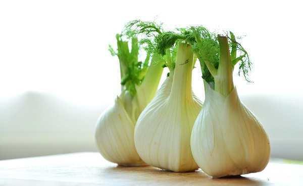 Fenykl a zdraví – na zácpu i překyselený žaludek