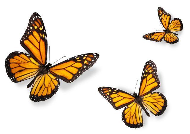 Bulózní epidermolýza – jak vypadá život lidí s nemocí motýlích křídel?