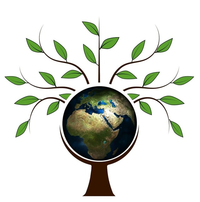Mýdlové ořechy (reetha) – super na pokožku, vlasy i pro ekologické praní prádla.