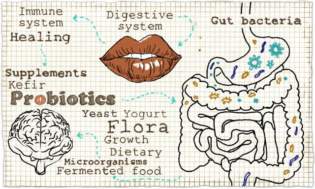 Hormon Leptin – může rozhodovat o vaší váze