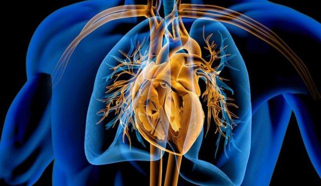 Jak na zdravé srdce a zdravé cévy? Poradíme vám…