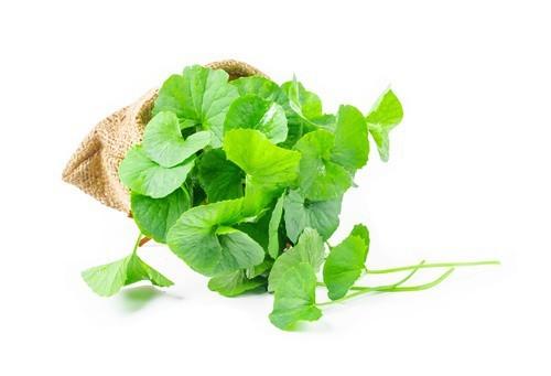 Gotu kola (Pupečník asijský) a zdraví – na co tuto bylinku použít?